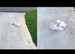 Enlace a Este perrito llevando el diario a su amo es lo más adorable que verás en mucho tiempo