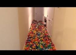 Enlace a Hizo el día más feliz de este perro al llenar toda su casa de bolas de goma
