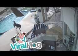 Enlace a La gran salvación de este perro a su compañero que no sabía salir de la piscina