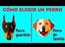 Enlace a Cómo elegir la raza de perros perfecta para ti