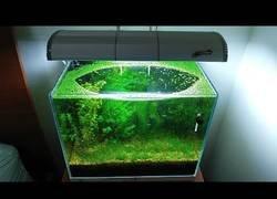 Enlace a La vida en una pequeña pecera sin CO2, filtros ni fertilizantes durante 6 meses