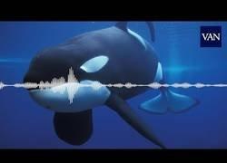 Enlace a La orca que habla
