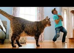 Enlace a Cuando finges estar muerto delante de tu gato esta es su reacción