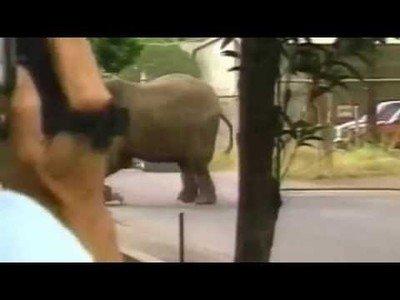 La terrible historia de Tyke la elefanta