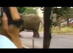 Enlace a La terrible historia de Tyke la elefanta