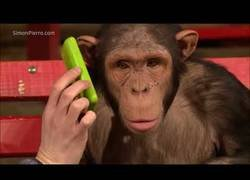 Enlace a Como reaccionan los monos a la magia