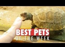 Enlace a Los animales más bonicos que nos han enamorado esta semana