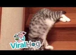 Enlace a Curiosa manera de bajar las escaleras de este gato