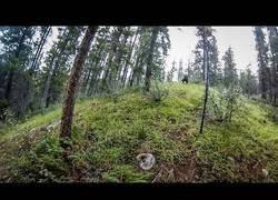 Enlace a El terrible encuentro con un oso en pleno bosque