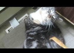 Enlace a No sabrás lo que es el placer hasta que veas qué siente este gato al ser rascado por su rascador