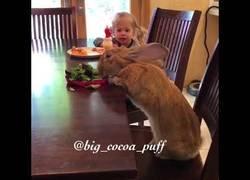 Enlace a Compartiendo mesa de desayuno con un invitado especial
