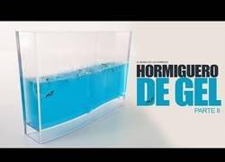 Enlace a Creando un hormiguero de gel