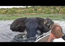 Enlace a El ataque de un elefante al bote de unos turistas que le hacían fotos