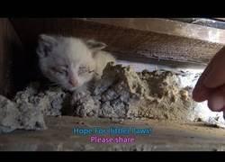 Enlace a Rescate a una familia de gatos
