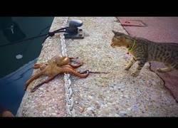 Enlace a Reza para no cruzarte con algunos de estos gatos en tu vida