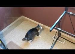 Enlace a Este gato se queda todo loco cuando le quitan el vidrio de la mesa