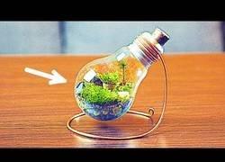 Enlace a Como crear un mini jardín en una bombilla