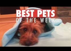 Enlace a Los animalicos más adorables que hemos conocido por la red esta semana