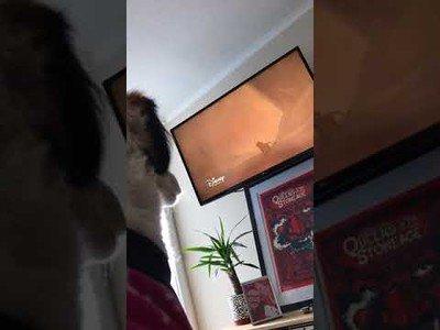 Este perro llora por la escena de