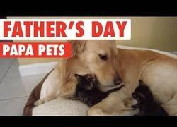 Enlace a Papás de animales tan adorables que te enamoran al instante