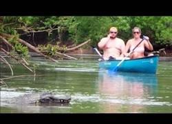 Enlace a Gastando bromas en un río con un cocodrilo por radiocontrol