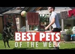Enlace a Los animalitos más adorables que se han dado a conocer en youtube esta semana