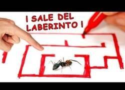 Enlace a El laberinto para hormigas