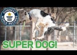Enlace a Este perro acaba de conseguir el Récord Guinness a más habilidades en un solo minuto