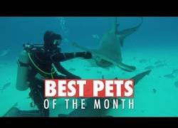 Enlace a Los animales que más han dado que hablar durante el mes de Junio