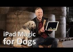 Enlace a La divertida reacción de estos perros al ver unos trucos de magia en un iPad