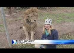 Enlace a Quiero conocer a la persona que pensó que era buena idea hacerle una entrevista a un león