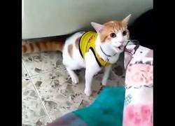 Enlace a Este gato está dando la vuelta al Mundo por cantar los goles de Colombia en el Mundial