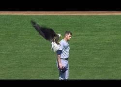 Enlace a Aparición de animales durante espectáculos deportivos