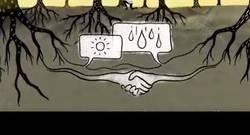 Enlace a ¿Cómo se comunican los árboles entre ellos?