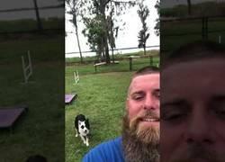Enlace a El gran entrenamiento de este perro que obedece a la perfección a todo lo que le dice su dueño