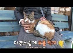 Enlace a La bonita historia del gato que se sienta con la gente en el banco de esta pizzería