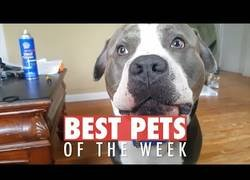 Enlace a Los animales más bonitos de internet durante esta última semana