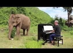 Enlace a Tocándole Bach a un elefante ciego