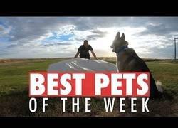 Enlace a Los animales más adorables que hemos conocido esta semana
