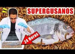 Enlace a Supergusanos carnívoros vs pescado