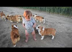 Enlace a Estos perros