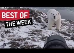 Enlace a Los mejores vídeos que hemos podido disfrutar esta semana