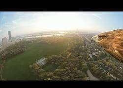 Enlace a Una visita a Vienna a bordo de un águila