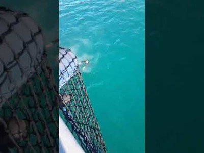 La brutal sorpresa que se llevó este tío tras saltar al mar desde un barco