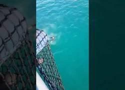 Enlace a La brutal sorpresa que se llevó este tío tras saltar al mar desde un barco