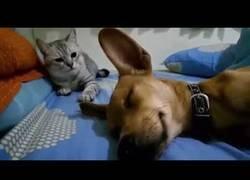 Enlace a A este gatico no le hace nada de gracia que le tiren un pedo cerca de él