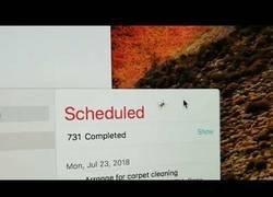 Enlace a Pide ayuda a todo el mundo porque se le ha metido una araña en su pantalla del iMac y no sabe el motivo