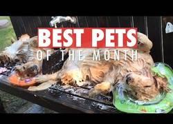 Enlace a Los animales más bonitos que internet nos ha dado a conocer este mes