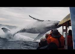 Enlace a El increíble salto de esta ballena que cogió por sorpresa a todos los turistas