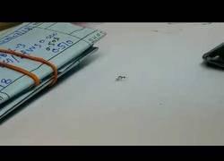 Enlace a El arte de una hormiga para robarse un diamante